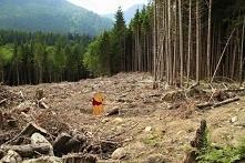 Ktoś zniszczył stumilowy las Kubusia.