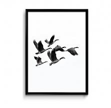 Ptaki - plakat