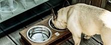 Ekskluzywne akcesoria dla psów znajdziesz w sklepie Bowl and Bone. Oferujemy ...