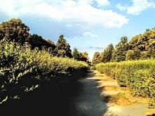 Park im. księcia Józefa Poniatowskiego w Łodzi. Podobno podczas I wojny światowej, gdy panował głód, mieszkańcy w tym parku uprawiali ziemniaki.