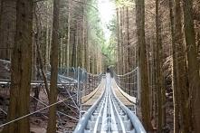 Zip World Fforest Coaster, Wales
