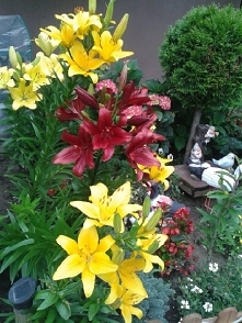 Mamy ogródek:-)