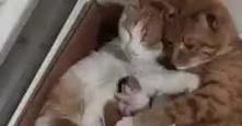Kocia rodzinka :-) filmik po kliknięciu w zdjęcie