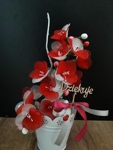 kwiat z rajstop