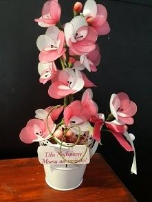 kwiat z rajstop na dzień mamy