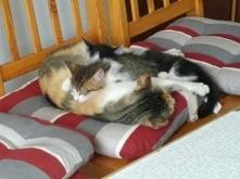 śpiące królewny ❤