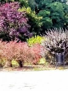 """Łódzki park Helenów. Park ten znalazł również malutkie miejsce w poezji Julian Tuwima w """"Kwiatach polskich"""": """"...Zieloną czwórką się dojedzie do Zielonego Helenowa..."""" Zielona c..."""