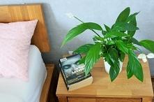 Rośliny oczyszczające powietrze z toksyn - więcej po kliknięciu w zdjęcie