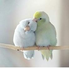 Kisses#^ 3^