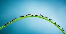 Jak pozbyć się mrówek z domu? Poznaj 10 sprawdzonych metod
