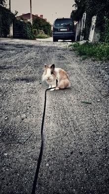 On a walk.