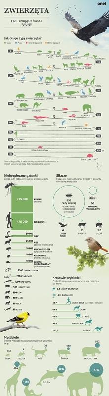 Fascynujące fakty ze świata zwierząt
