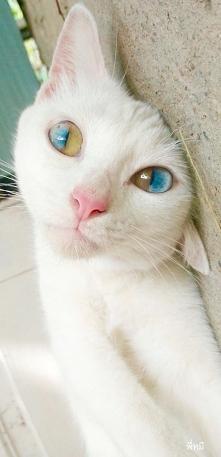 Kocham koty !