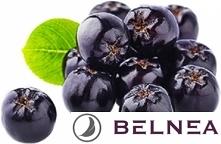 Olej z nasion aronii jest kluczowym składnikiem kremów marki Belnea- DEEP VIO...