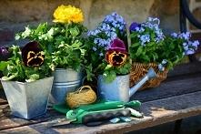 Ciekawe akcesoria ogrodowe: meble, ozdoby i gadżety do ogrodu!