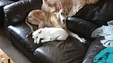 My Dogs Pypa and Roxy <3