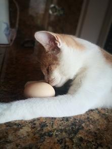 A może jajecznica???