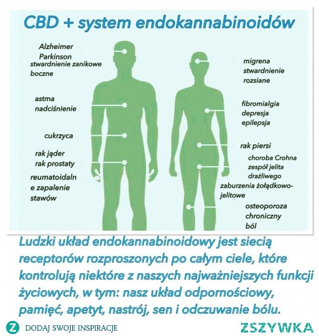 Olej CBD- Jedna roślinka a tyle właściwości! Jeżeli jeszcze ktoś nie wie jak działa #CBD na nasz układ endokannabinoidowy to koniecznie obejrzyj tą infografikę ! Szkoda życia na ból i choroby olej CBD 5 % essenz znajdziesz na www konopiafarmacja pl