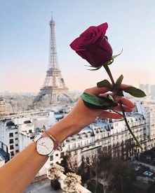 Paris & Red Rose