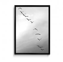 Ptaki plakat