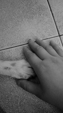 </3. Mój najkochanszy przyjaciel odszedł... :'( :'( :'(....