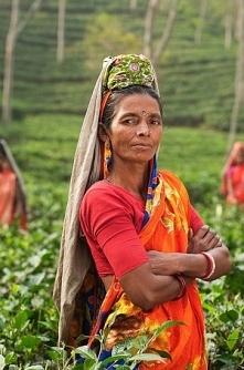 Ashwagandha (indyjski żeń szeń) – właściwości lecznicze, zastosowanie.