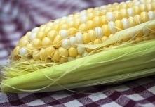 Mąka kukurydziana – właściwości i zastosowanie, alternatywa, bez glutenu.