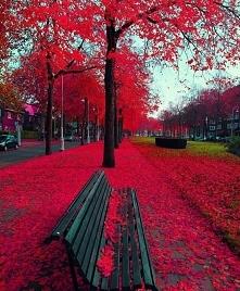 Amsterdam Netherlands <3