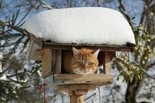 Karmnik w zimie zawsze potrzebny .Słowik,wróbel,kos,jaskółka,kogut,dzięcioł,g...
