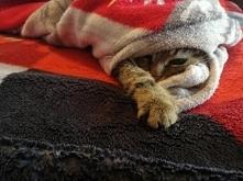 """Sezon na """"jest mi zimno"""" uważam za otwarty"""