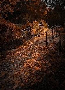 liście - jesień ♥