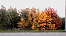 """""""Pani Jesień"""" - Przeszedł sobie dawno śliczny, złoty wrzesień... Teraz..."""