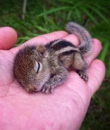 Wiewióreczka ajjj