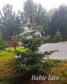 Nici wytwarzane przez pająk...