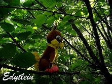 Szyta przytulanka Wiewiórka