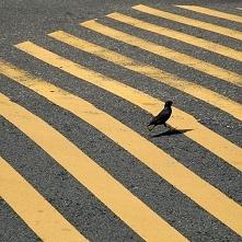Zielone,żółte,czerwone.STOP,bo w życiu trzeba kroczyć dużymi , małymi krokami...