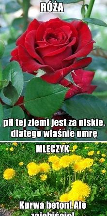 Są dwa rodzaje kwiatów...