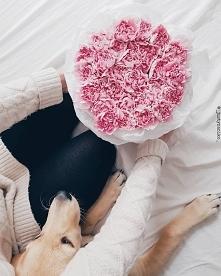 Zapraszamy na e-kwiaty.pl. ...