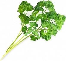 Wkład nasienny Lingot zioła podstawowe pietruszka kędzierzawa