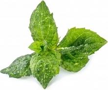 Wkład nasienny Lingot zioła podstawowe mięta