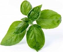 Wkład nasienny Lingot zioła podstawowe bazylia