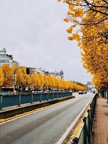 Bruksela ***