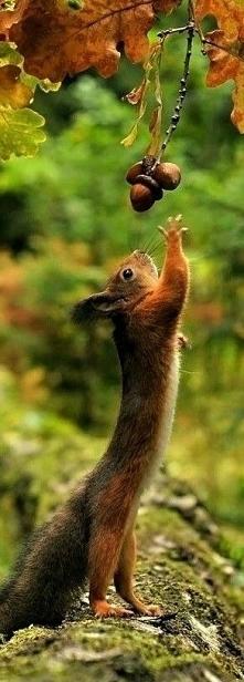 Wiewióreczka :)