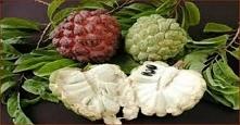 Ten jeden owoc zabija złośliwe komórki 12 różnych typów raka
