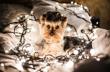 Lampki choinkowe, które nie zepsują Ci świąt kupisz w sklepie Ekotechnik24.pl