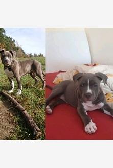 Izzy 5 miesięcy vs Izzy 2 miesiące ♡