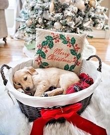 Święta tuż tuż… Świąteczne Fotografie Od Których Nie Można Oderwać Wzroku!