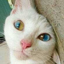 Meow :3