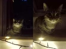 Jak zjeść całe święta i nic nie zostawić? Czyli poradnik tylko dla kotów (kli...