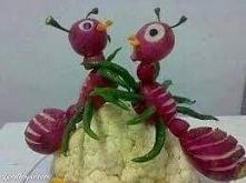 Mrówki rzodkiewkówki